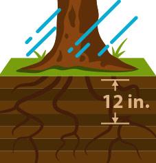 Watering Tip 4