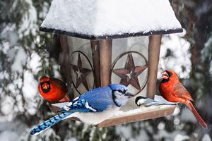 bird feeder in winter with birds