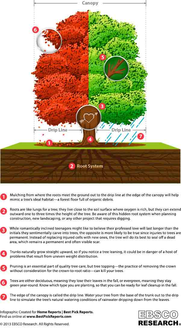 How To Care For Different Parts Of A Tree