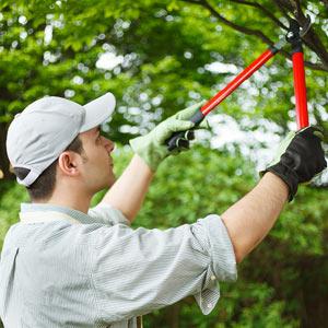 Man Cutting Branch