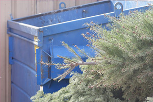 dry Christmas trees by disposal bin