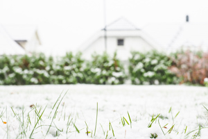 grass poking through snow in yard