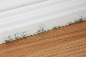 House Mold Problem