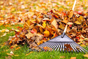 rake laying on pile of leaves
