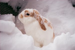 white and brown rabbit sitting in snow
