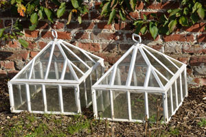white cloches covering plants