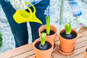 woman wearing gloves watering three potted plants