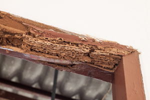 wooden door frame with termite holes and damage